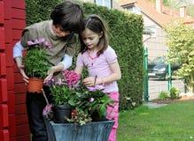 Geschwister, die Blumen pflanzen Stockbild