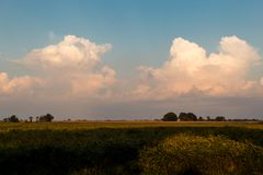 Geschwollene Kumuluswolken auf einem hellen Hochsommermorgen, über Illinois-Ackerland stockbild