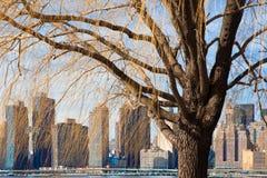 Gesehener durch Baum New York City Skyline am Bock-Nationalpark in Long Island-Stadt lizenzfreie stockbilder