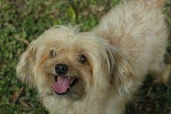 Geselecteerde nadruk van een aanbiddelijke hond royalty-vrije stock foto