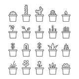Gesetzte Blumenanlagen und blühender Kaktus in den Töpfen lokalisiert Lizenzfreies Stockbild