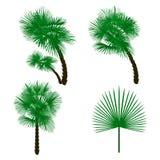 Gesetzte grüne Palme auf weißem Hintergrund Abbildung Lizenzfreies Stockfoto