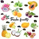 Gesetzte Illustration des Aquarells der tropischen Früchte Stockfotos