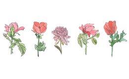 Gesetzte Mohnblume des Aquarells, Chrysantheme und rosafarbene Blume mit Blättern Lizenzfreie Stockbilder