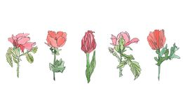 Gesetzte Mohnblume des Aquarells, Tulpe und rosafarbene Blume mit Blättern Stockfotos