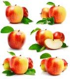 Gesetzte rote Apfelfrüchte mit Schnitt- und Grünblättern Stockbild