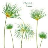 Gesetzte tropische Palmenpapyrusblätter realistische Zeichnung in der flachen Farbart Getrennt auf weißem Hintergrund Lizenzfreies Stockfoto