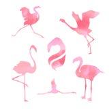 Gesetzter Vektor des Flamingos Stockfoto