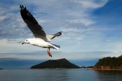 Gesetztes freies des Vogels Stockfoto