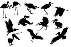 Gesetztes Isolat des Reihers und des Pelikans lizenzfreie abbildung