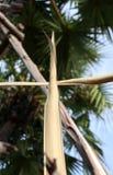 Gesetztes Kreuz des trockenen Palmblattes zum Kruzifix auf Palmblättern mit Himmelhintergrund stockfoto