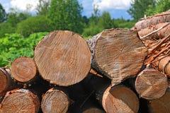 Gesägt herauf Baum Stockbilder