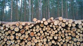 Gesägt herauf Baum Stockfoto