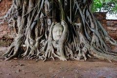 Gesicht Buddha im Baum Lizenzfreies Stockfoto