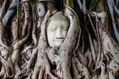 Gesicht Buddha im Baum Stockbild