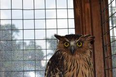 Gesicht der Eule im Käfig stockfoto