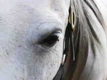 Gesicht der grauen Stute Lizenzfreies Stockfoto