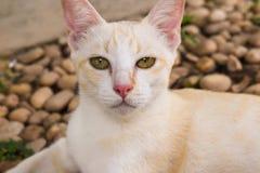 Gesicht der Katze Lizenzfreie Stockbilder
