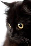 Gesicht der netten schwarzen Katze Stockbilder