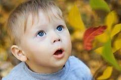 Gesicht des erstaunlichen Kindes, das Blätter betrachtet Lizenzfreie Stockfotos
