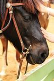 Gesicht des Pferds Lizenzfreie Stockbilder