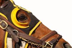 Gesicht des Rennen-Pferds mit Exemplar-Platz Lizenzfreie Stockfotos