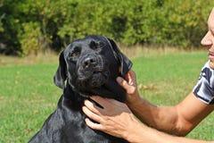 Gesicht des schwarzen Hundes Stockfoto