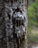 Gesicht des Waldes Stockbild