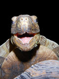 Gesicht einer glücklichen Schildkröte Lizenzfreies Stockfoto