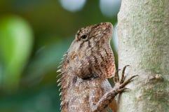 Gesicht eines Chamäleons Stockfotografie