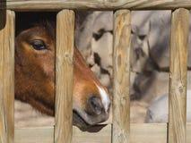 Gesicht eines Pferds Stockfoto