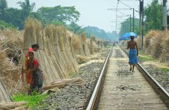 Gesicht von Bengal lizenzfreie stockfotos