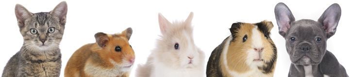 Gesichter von verschiedenen Haustieren stockfotos