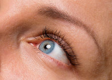 Gesichtsfrau mit Augen und den Wimpern Stockbild