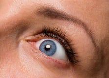 Gesichtsfrau mit Augen und den Wimpern Lizenzfreie Stockfotografie