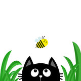 Gesichtskopfschattenbild der schwarzen Katze, das oben zu fliegender Biene schaut Tautropfen des grünen Grases Nette Zeichentrick Stockfotografie