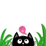 Gesichtskopfschattenbild der schwarzen Katze, das oben zum Vogel auf Kopf schaut Tautropfen des grünen Grases Nette Zeichentrickf Stockbilder