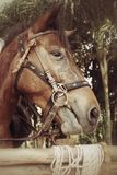 Gesichtspferd Stockfotos