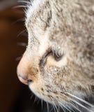 Gesichtsporträt einer Katze Makro Stockbilder
