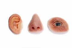 Gesichtsprothesen-Produkte auf weißem Hintergrund Stockfotografie