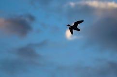 Gesilhouetteerd Duck Flying in de Donkere Avondhemel royalty-vrije stock foto