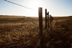 Gesilhouetteerd omheiningslijn en gras die in de wind blazen stock fotografie