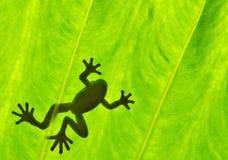 Gesilhouetteerd van kikker Stock Fotografie