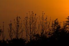 Gesilhouetteerde bomen Stock Foto's