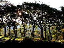Gesilhouetteerde bomen in de recente zomer Royalty-vrije Stock Foto
