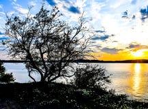 Gesilhouetteerde Bomen in de Zonsondergang royalty-vrije stock fotografie