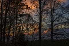 Gesilhouetteerde bomen, Kleurrijke Hemel Stock Afbeeldingen