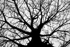 Gesilhouetteerde boom Stock Afbeeldingen