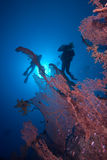 Gesilhouetteerde duikers boven een Reuze overzeese ventilator Stock Afbeeldingen