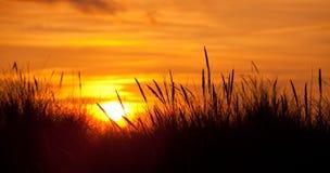 Gesilhouetteerde grassen bij zonsondergang Stock Fotografie